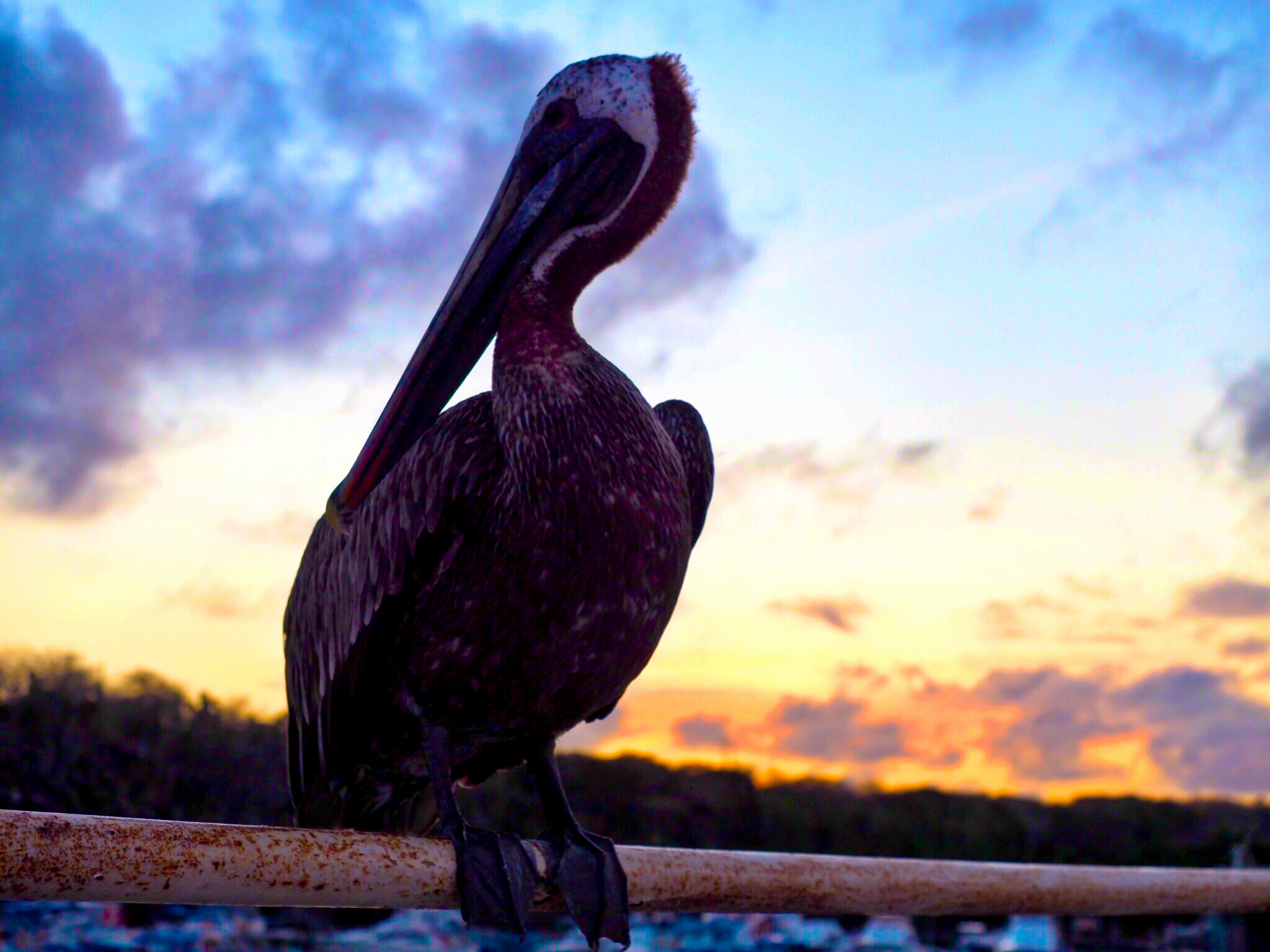 Galapagos Does Paradise Exist Johan Travels The World
